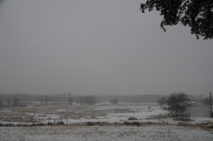 Winter 2.11.2010, Poprock Pasture