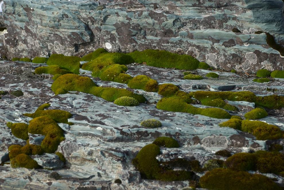 Moss garden, Montana Outdoors, www.montucky.wordpress.com.